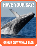 join us on our gray whale blog