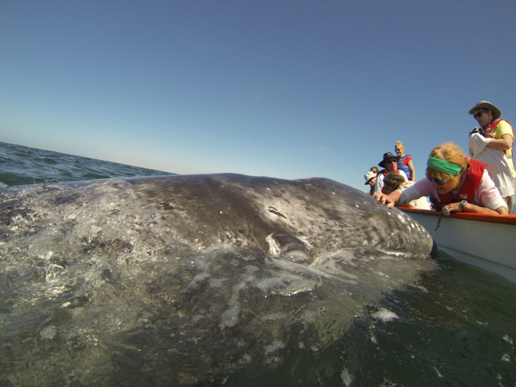 Sue Arnold with Gray Whale
