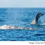 WHALES BREATH COULD BECOME HI TECH SAFETY NUMBER